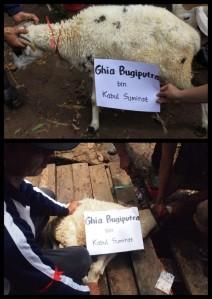 Hewan Qurban an. Ghia di Pandeglang (2010) (dok. Komunitas Lebah)