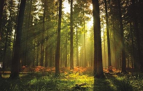 Forestsssssssss (1)