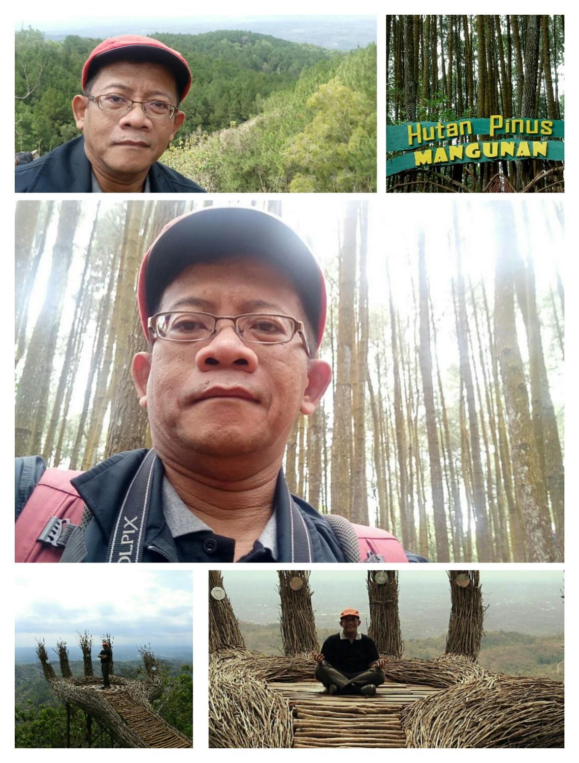 Hutan pinus mangunana